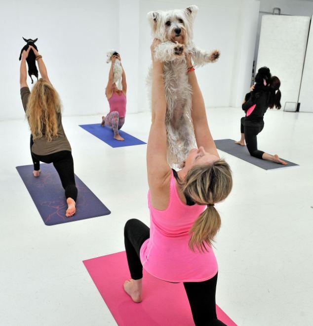 狗瑜伽第一式