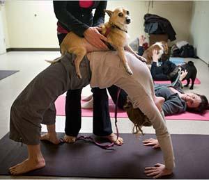 狗瑜伽第三式
