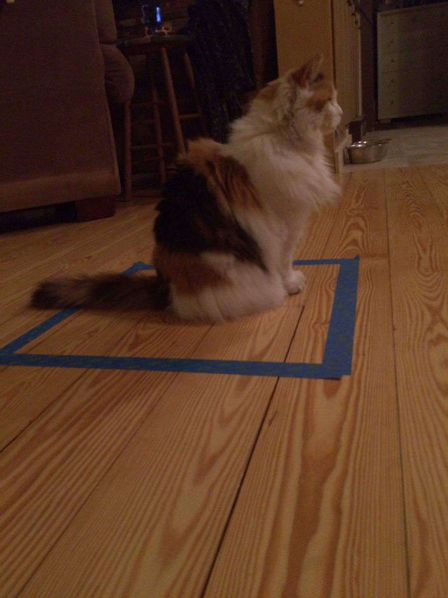 貓咪走進方格