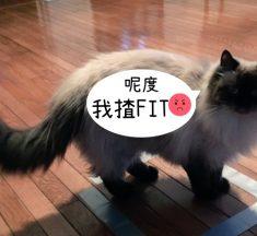 貓咪方格:原來咁簡單就可以捉到佢!
