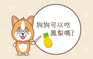 狗狗可以吃鳳梨嗎?