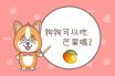 狗狗可以吃芒果嗎