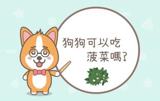 狗狗可以吃菠菜嗎